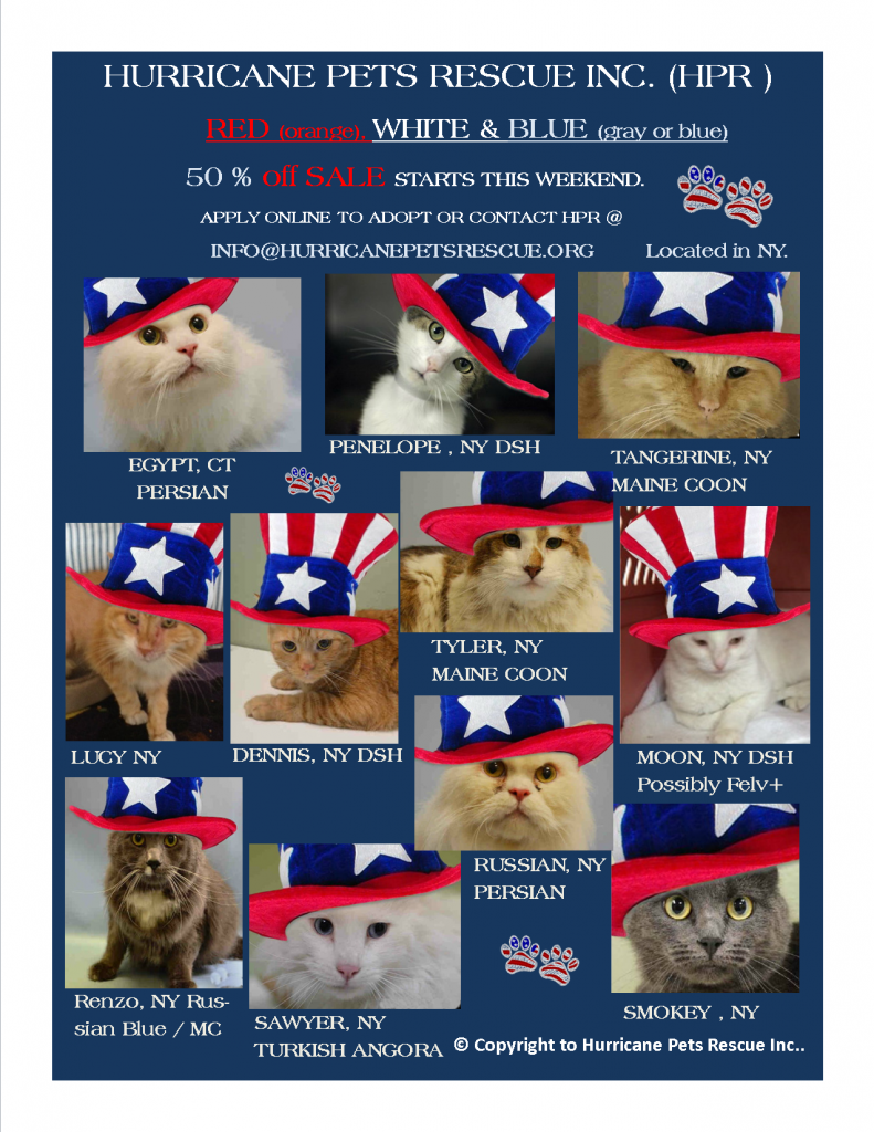 4th of July sale NYC cats