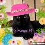 Simone 3